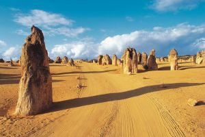 Pinnacles Desert Koalas and Sandboarding 4WD Day Tour from Perth - Accommodation Great Ocean Road