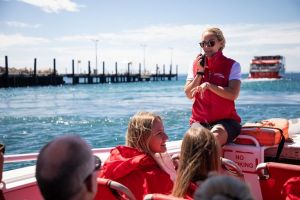 Rottnest Island Tour from Perth or Fremantle including Adventure Speed Boat Ride - Accommodation Great Ocean Road