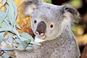 Perth Zoo General Entry Ticket and Sightseeing Cruise - Accommodation Great Ocean Road